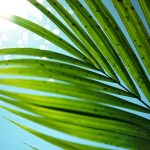 Palm, leaves, sky, sun, summer