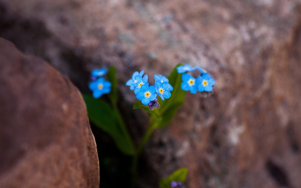 turquoise flowers in stones