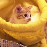 Sell ​​cute cute cat computer wallpaper 1440×900 HD download