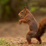 sneaking, stand, squirrel