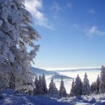 Winter nice forest snow scene HD wallpaper