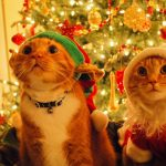 Cat, costume, christmas tree, toy, new year christmas wallpaper