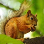 Forest, branches, squirrels, walnuts, cute animals wallpaper