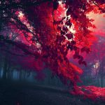 Red leaves landscape desktop wallpaper in autumn forest