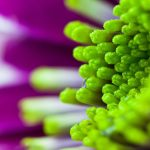 macro flower green-purple wallpaper