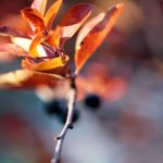 Little twig, autumn, autumn blur
