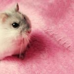 Cute mouse HD wallpaper pictures