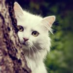 Tree behind white cat cute cute A wallpaper