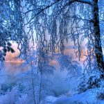Winter frost snow trees lake hd wallpaper
