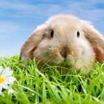 Cute rabbit HD animal wallpaper in the grass