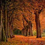 trees park autumn grove wallpaper