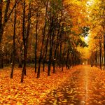 Autumn alley golden leaves wallpaper
