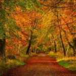 Autumn forest trail road