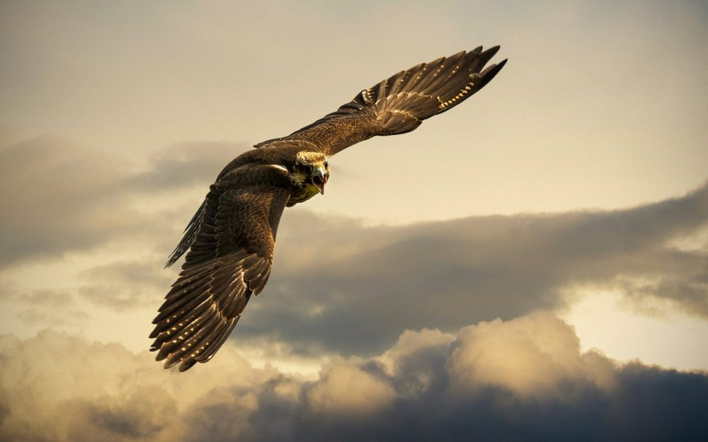 Eagle flying HD wallpapers pictures Daquan