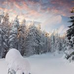 snow ate winter snow ate winter hd wallpaper