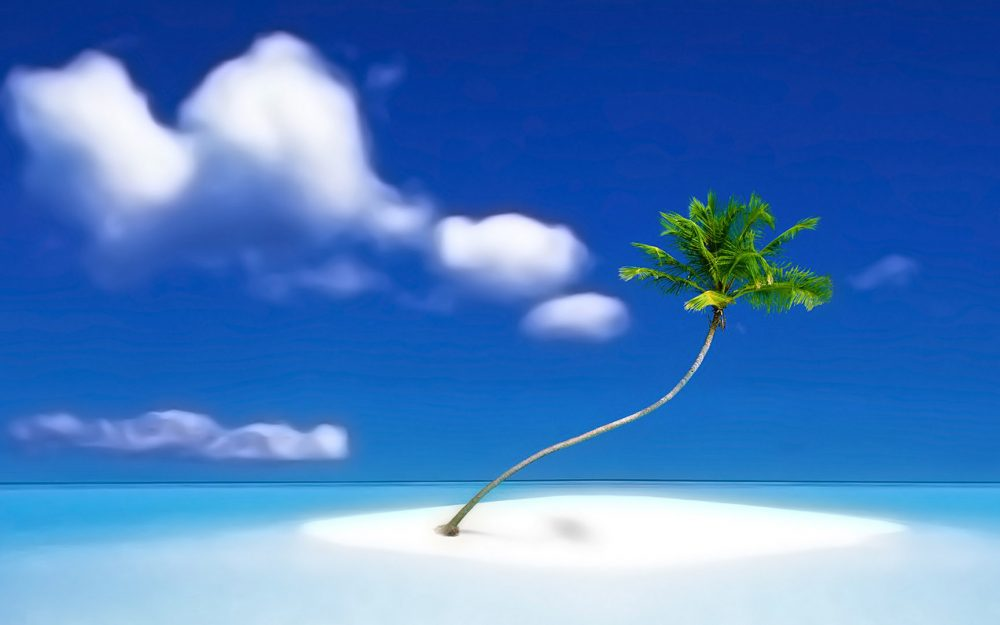 Nice seaside coconut tree desktop wallpaper