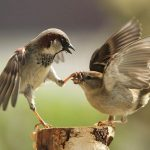 Little Sparrow HD Animal Wallpaper
