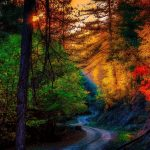 Autumn Forest Road Rays