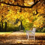 nature trees autumn bench leaves nature trees autumn bench leaves wallpaper
