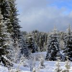 forest winter snow nature spruce hd wallpaper