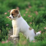 Cute dog watching the scenery HD wallpaper