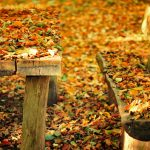 Autumn leaves bench table