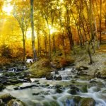 river autumn forest rays
