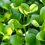 HD green plant desktop background