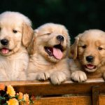 Cute cute dog HD wallpaper