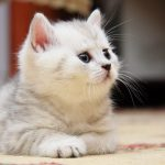 Cute cat cute HD desktop wallpaper