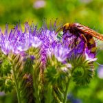 flower, plant, pollination, bee desktop background