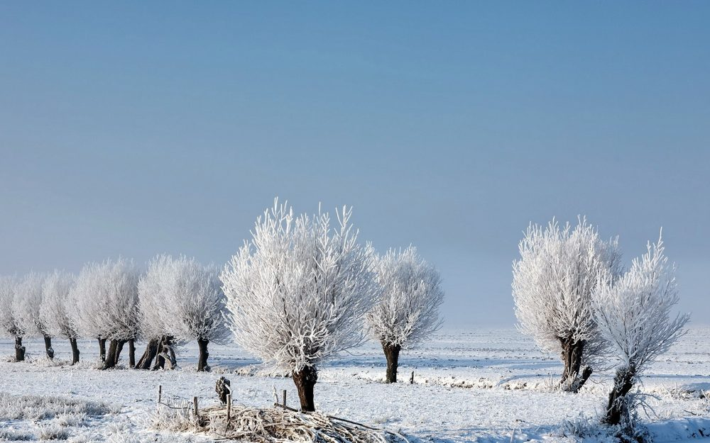 trees frost snow winter frost