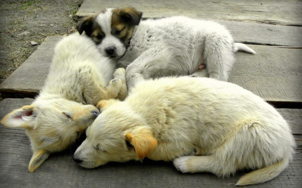 dogs, puppies