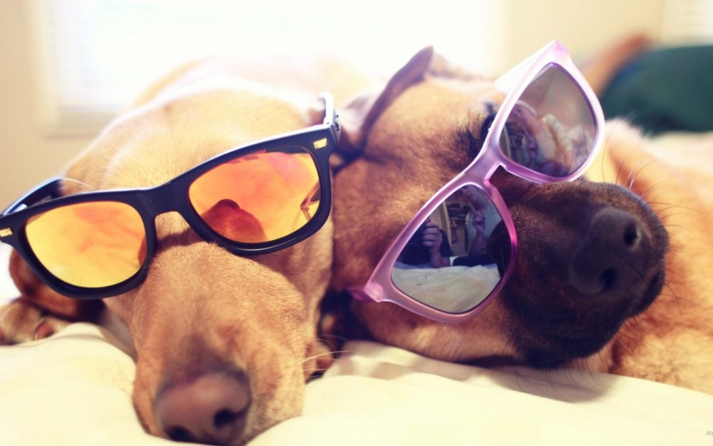 Star cute dog desktop wallpaper HD download