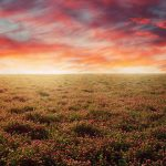 Expanse, landscape, sky. colors, nature, field, flowers