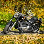 autumn, Harley-davidson, foliage, bike
