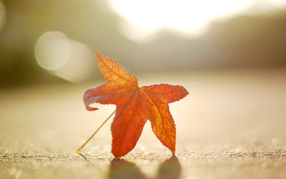 Small fresh autumn leaves on the ground, quiet beauty HD wallpaper pictures