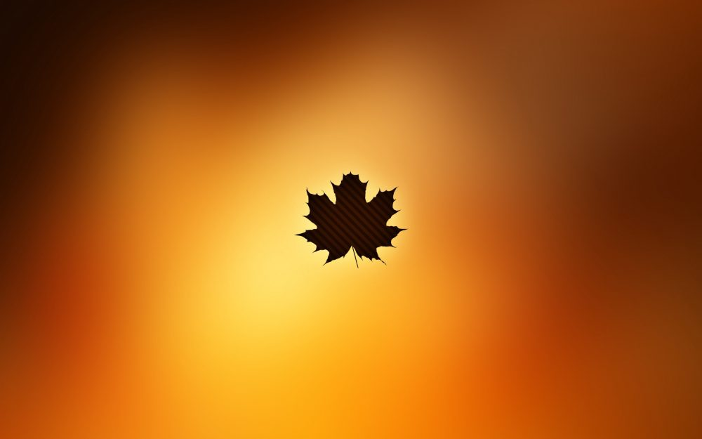 autumn, leaf, maple