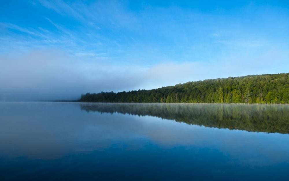 Nature, forest, lake