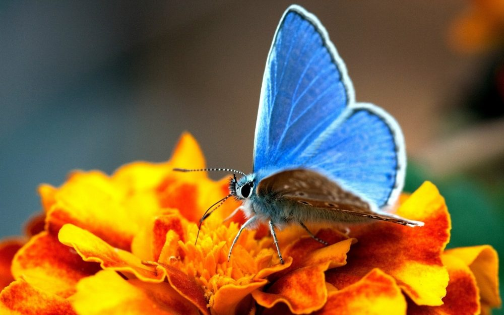 blue flower, wings, yellow