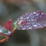 Water, drops, leaf