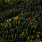 autumn, trees, aerial view, forest