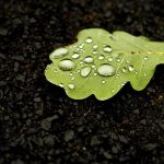 drops, leaf, water