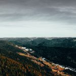 forest, aerial view, autumn, trees