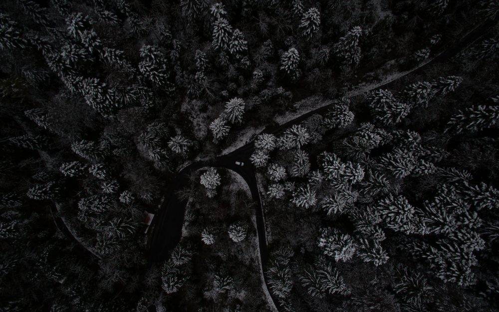 forest, trees, snow-covered, top view