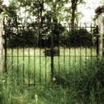 Mother Nature, grass, creative, gate, photo