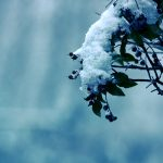 Photo, tree, trees, frost, nature, winter, snow