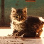 Little cat hd wallpaper