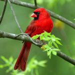 Spring bird on the branches pretty small fresh HD Wallpaper