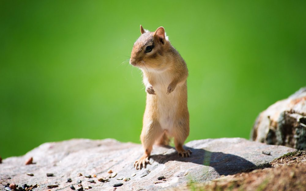 Small fresh and lovely squirrel HD wallpaper